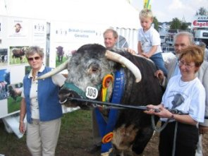 Castleview longhorns were successful in the showring once again at